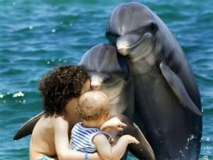 Дельфинотерапия. Правда ли помогает в лечении