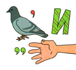 golubika