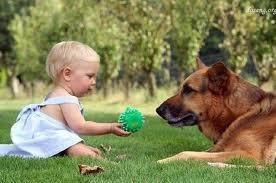 Что делать если ребенка укусила собака
